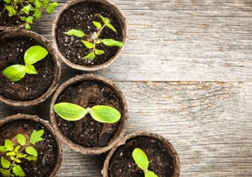 A group of pots with different staged sprouts growing in each one, representing segmenting leads for lead nurturing.
